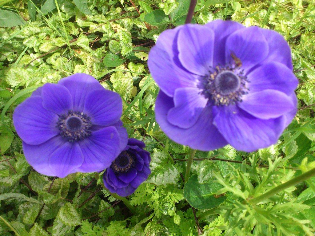 Blommor närbild