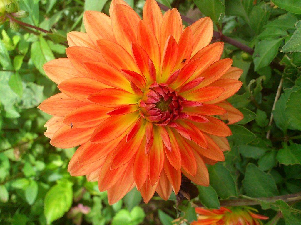 Vackert orange blomma
