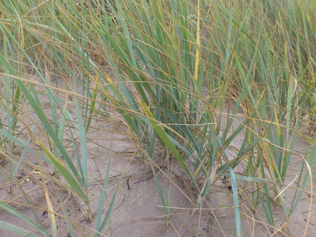vassen på stranden