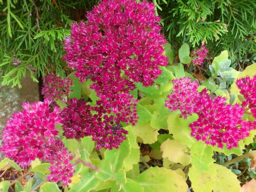 ljuvligt rosa blommor