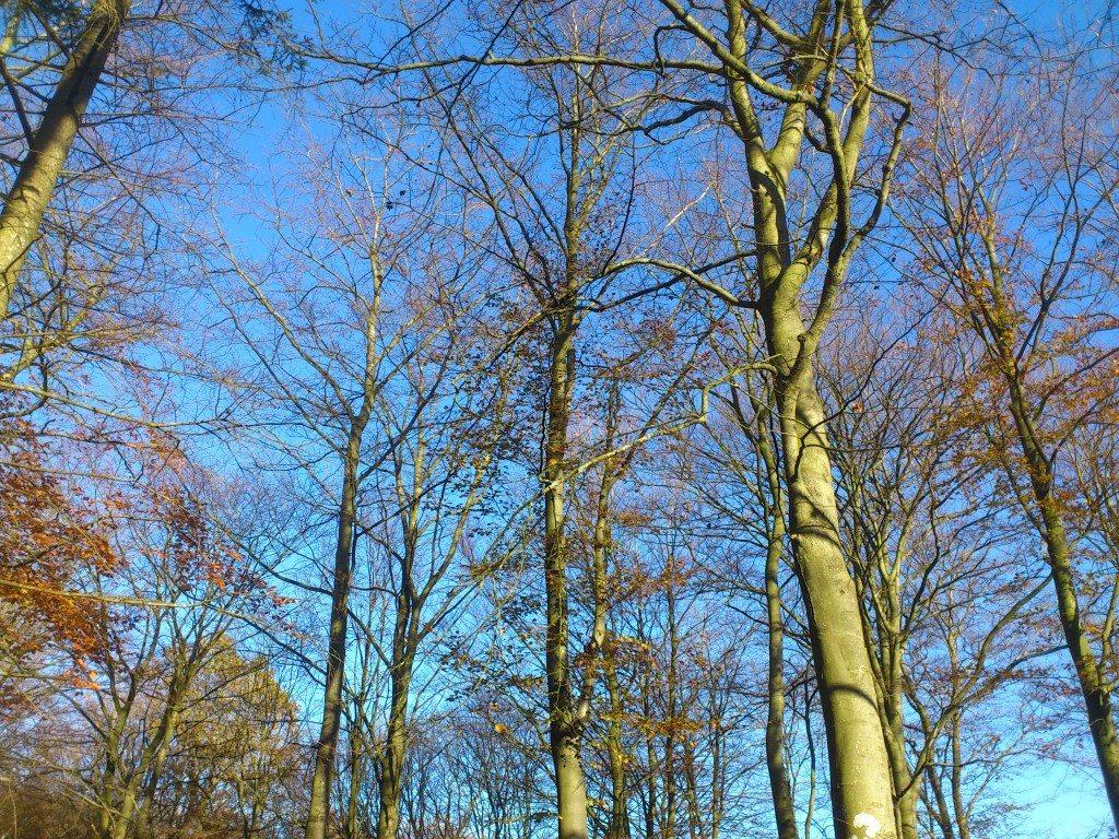 skogen en höstdag