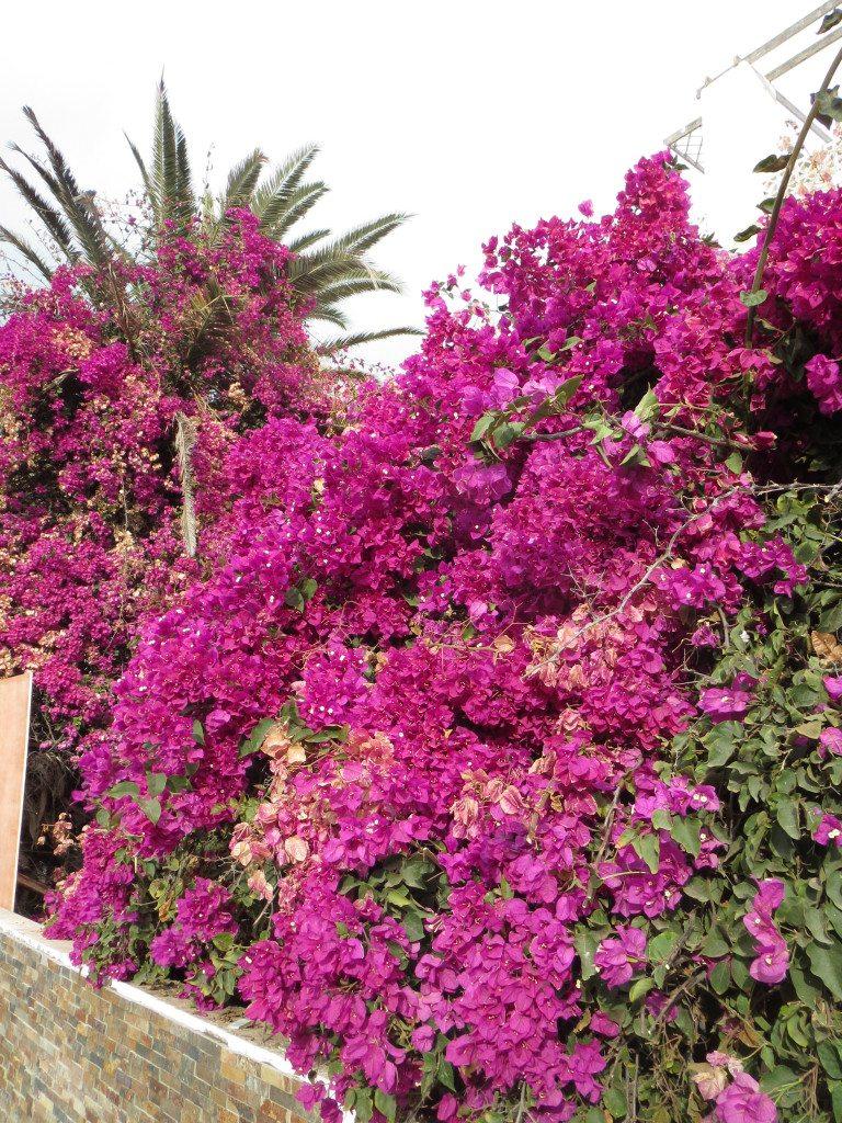 Rosa vackra blommor